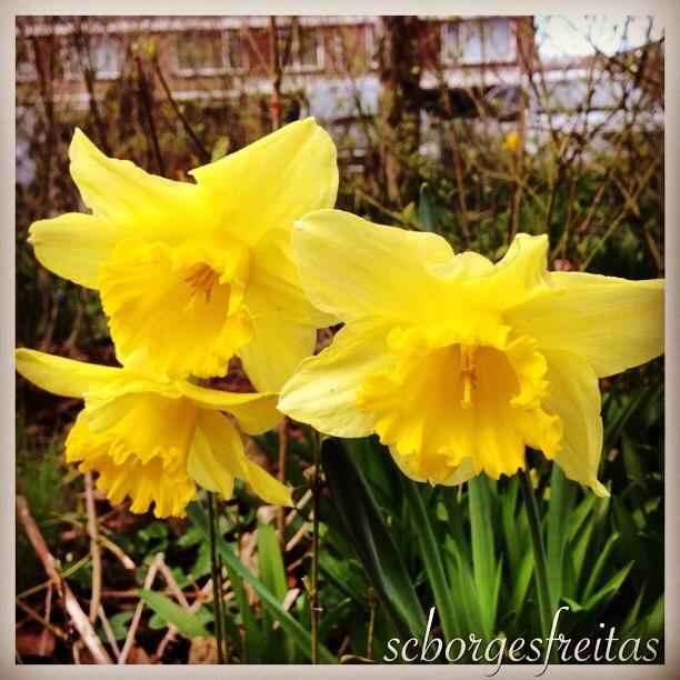 photo flor